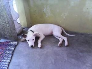 isay-dog
